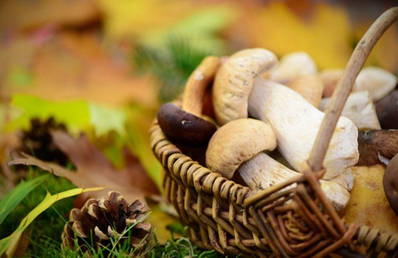 I funghi, come sceglierli nelle loro diversità