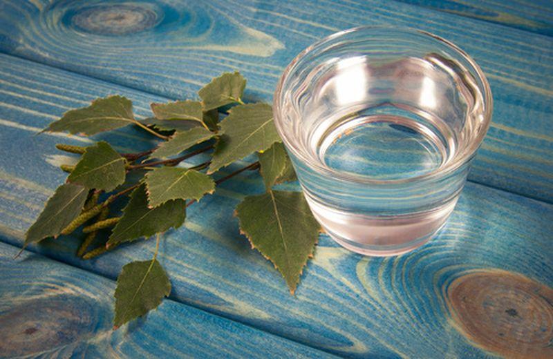 Le proprietà antinfiammatorie della betulla