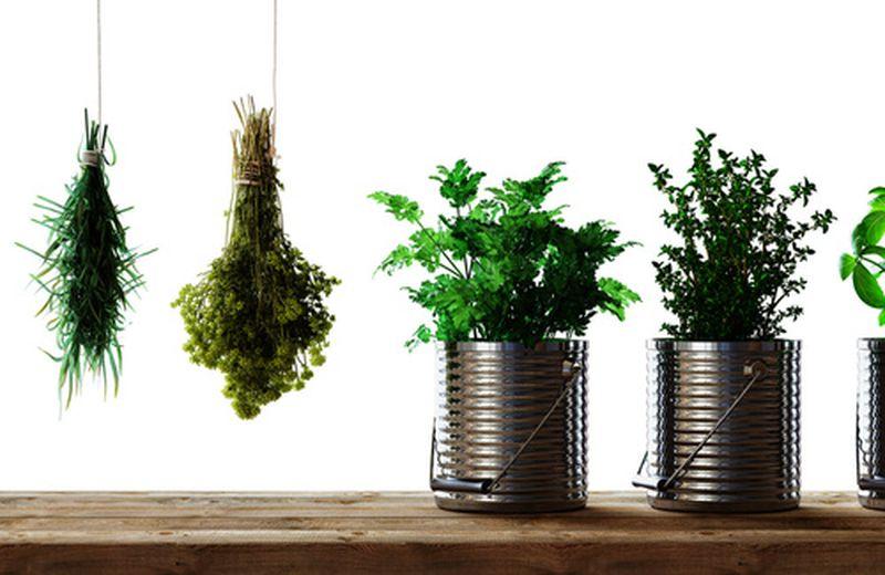 Perché cucinare con le erbe aromatiche