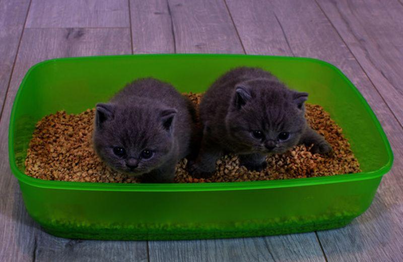La sabbia del gatto, come sceglierla ecologica