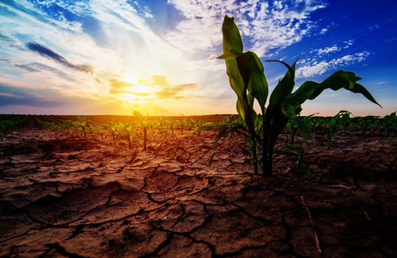 Gli effetti del cambiamento climatico nel quotidiano