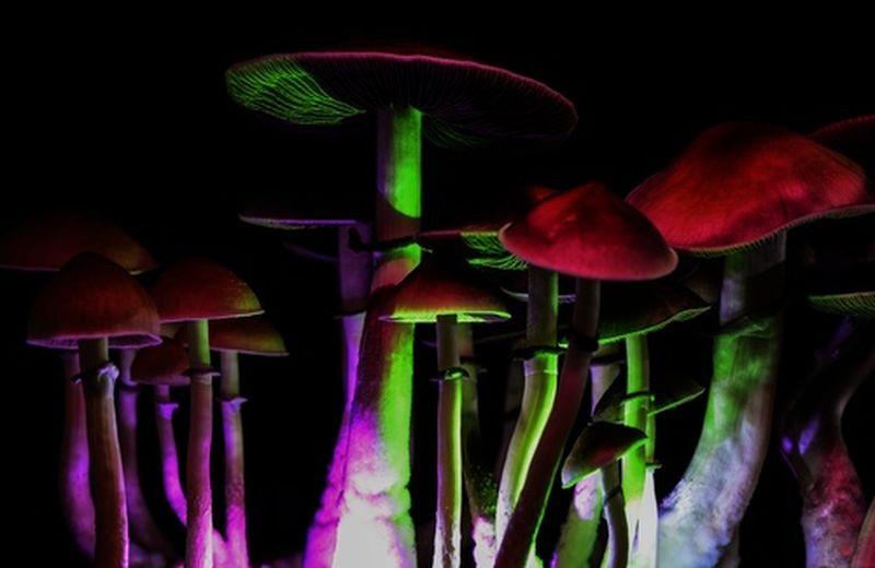 Funghetti allucinogeni, cosa sono?