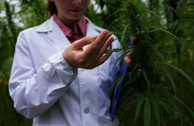 I benefici della cannabis ad uso terapeutico