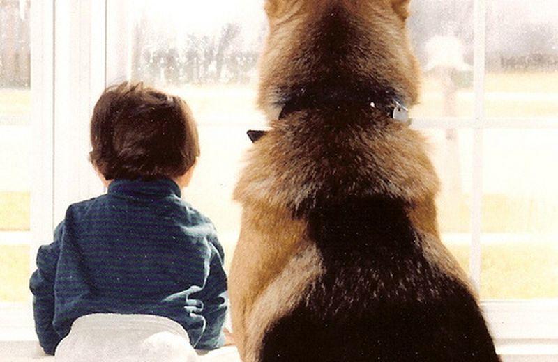 Centro pet therapy: il luogo della sintonia