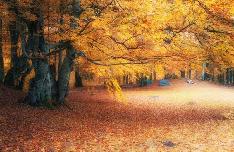 Autumn leaves: per accettare i cambiamenti