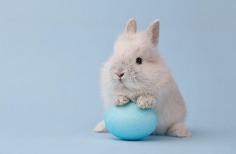 Come trascorrere una Pasqua in modo naturale