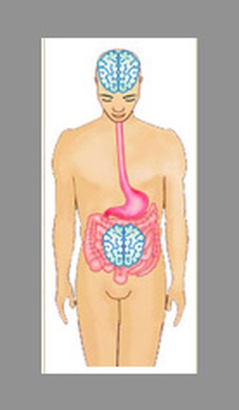 Riattiviamo il nostro secondo cervello: l'intestino