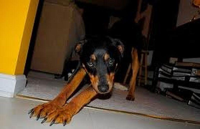 Quando i cani fanno yoga è Doga