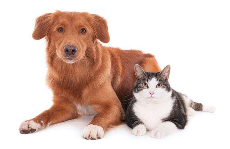 T Touch per cani e gatti