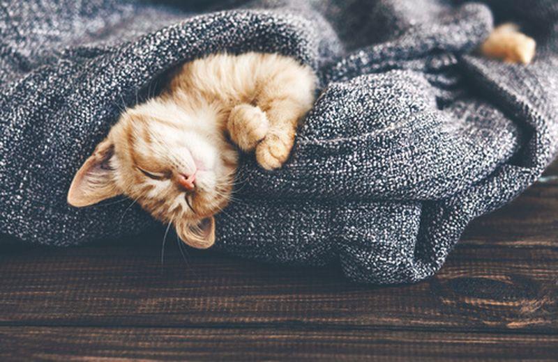Gli odori che infastidiscono i gatti