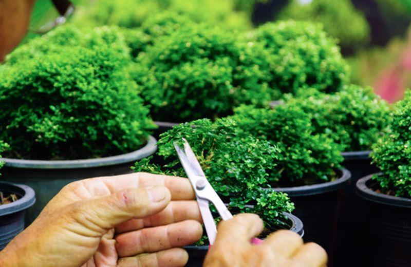 Cos'è l'air bonsai garden