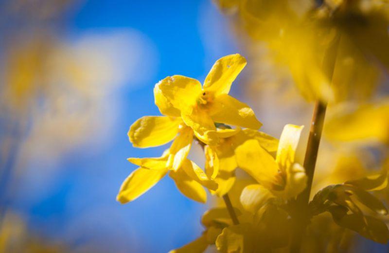 Olio di Iperico, un antirughe naturale