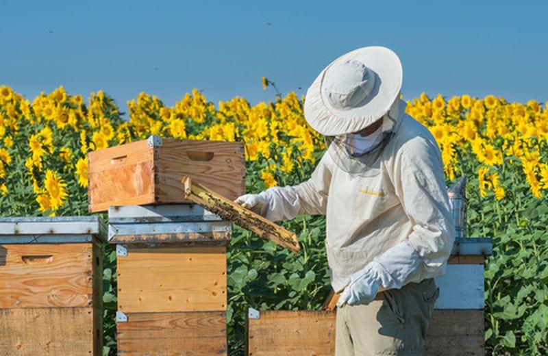 Smog e api in Italia