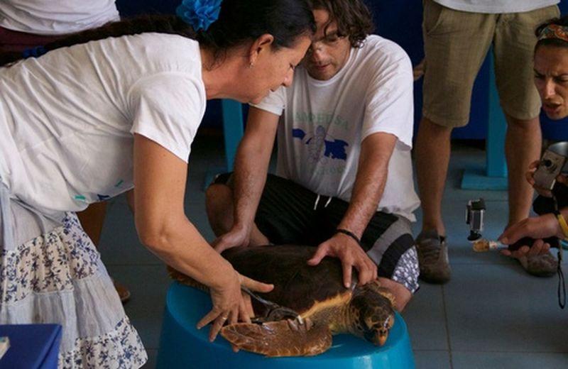 "A Lampedusa un ""ospedale speciale"" per le tartarughe marine"