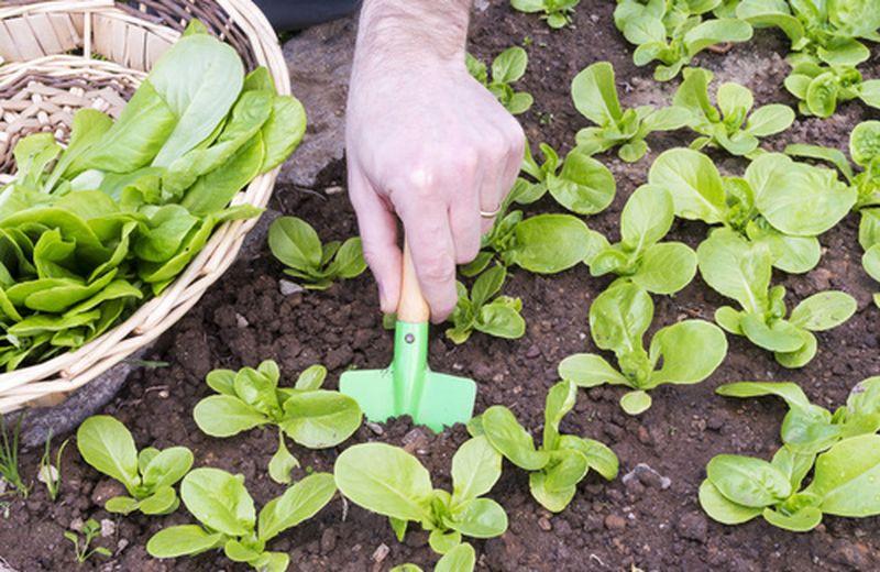 L'agricoltura biodinamica e le Cascine Orsine