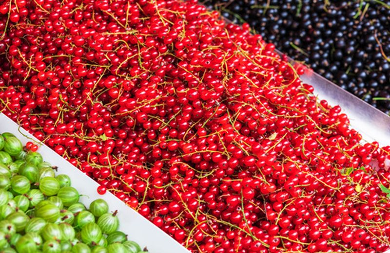 Ribes nero, rosso e bianco