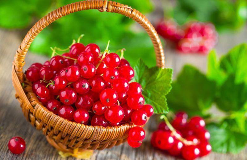 Ribes rosso, proprietà e benefici