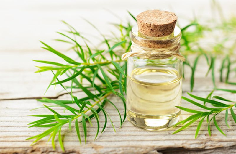 Tea tree oil: quando usarlo