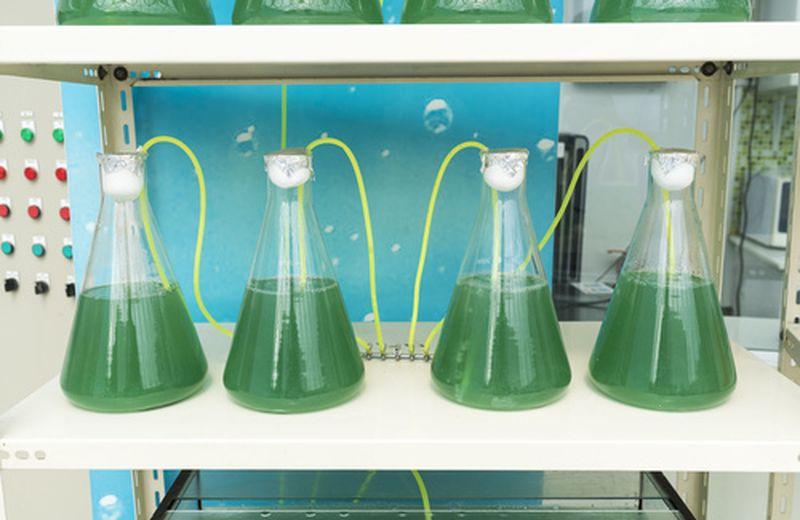 Il futuro del combustibile è nelle alghe