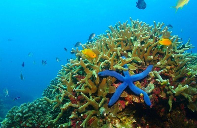 Palau e il divieto all'uso di creme solari