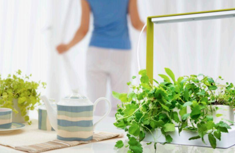 Kigarden Il Giardino Dentro Casa Cure Naturaliit