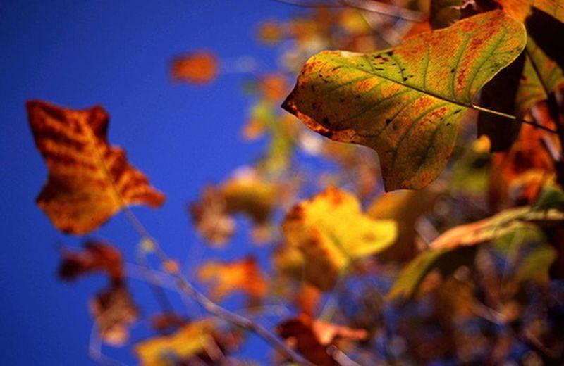 I prodotti fitoterapici dell'autunno