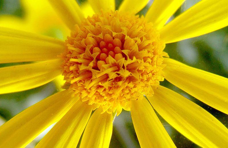 Il giallo nella cromoterapia