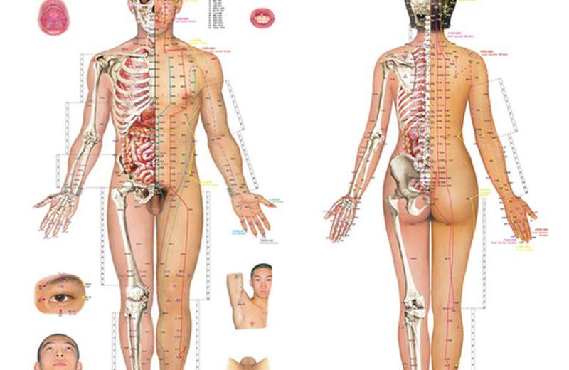Immunitario, amato sistema. Come nutrire Ojas (Ayurveda) e Wei qi (MTC)