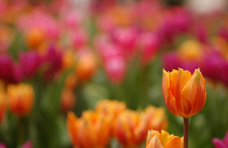 In primavera, rigeneriamoci con i prodotti fitoterapici