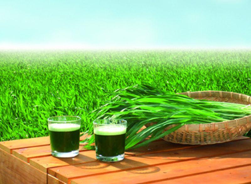 Succo d'erba d'orzo: benzina verde per il nostro organismo