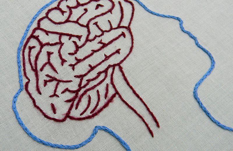 Il cervello plastico